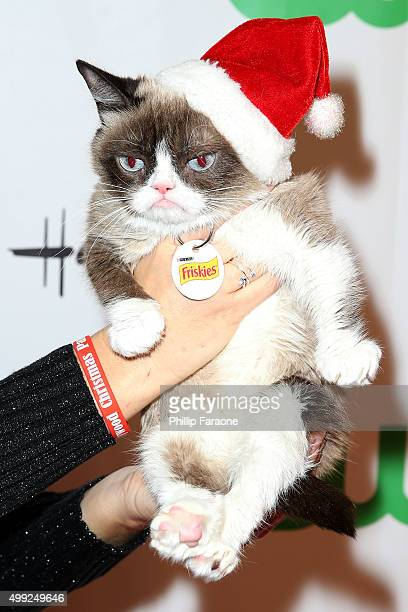 Grumpy Cat attends the 84th Annual Hollywood Christmas Parade on November 29 2015 in Hollywood California