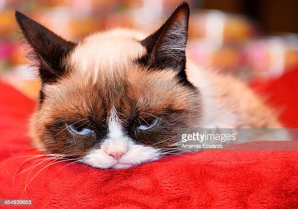 Grumpy Cat attends the Celebrity Internet Cat Super Group holiday event at Capitol Records Tower on December 10 2013 in Los Angeles California