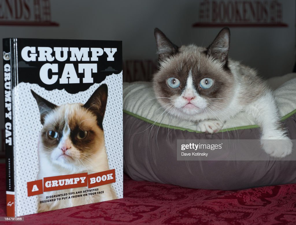 Grumpy Cat attends the 'Grumpy Cat: A Grumpy Book' Book Event at Bookends Bookstore on October 16, 2013 in Ridgewood, New Jersey.