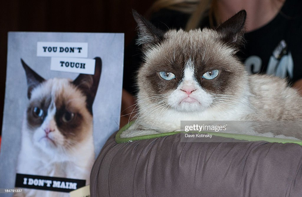 Grumpy Cat attends the 'Grumpy Cat: A Grumpy Book' book event at the Bookends Bookstore on October 16, 2013 in Ridgewood, New Jersey.