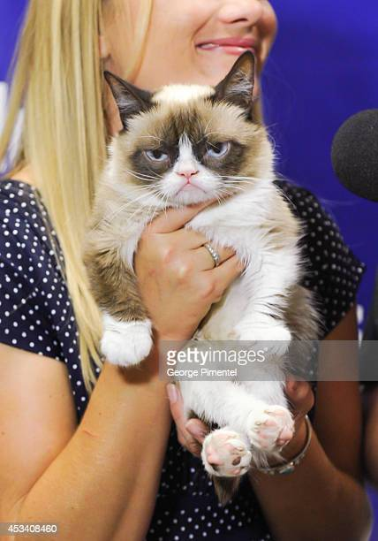 Grumpy Cat attends the 'Grumpy Guide To Life Observations From Grumpy Cat' book event at Indigo at Eaton Centre Shopping Centre on August 9 2014 in...