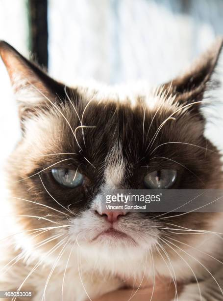 Grumpy Cat attends the Internet Cat Film Festival World Tour 20132014 at Echoplex on January 25 2014 in Los Angeles California