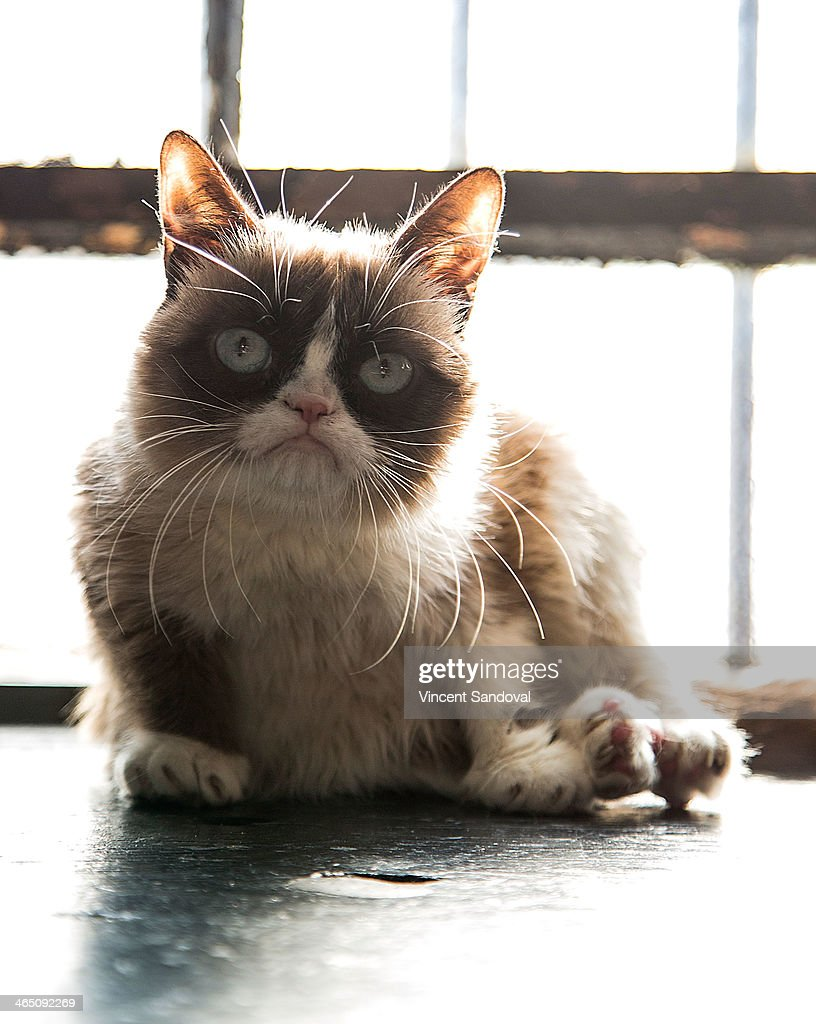 Grumpy Cat attends the Internet Cat Film Festival World Tour 2013-2014 at Echoplex on January 25, 2014 in Los Angeles, California.