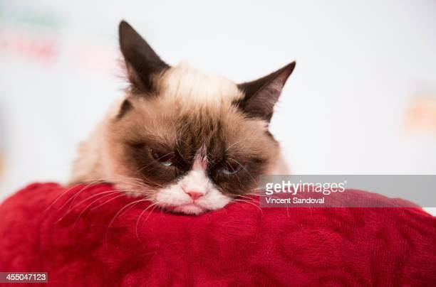 Grumpy Cat attends the Internet Cat Super Group Holiday Unveiling event at Capitol Records Tower on December 10 2013 in Los Angeles California