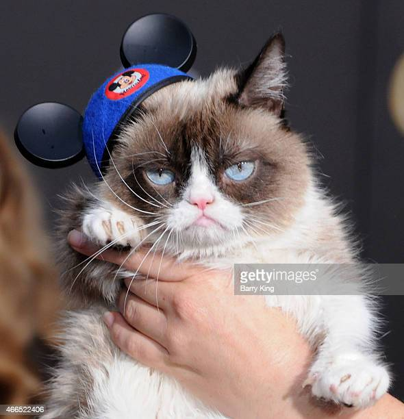 Grumpy Cat attends the premiere of 'Cinderella' at the El Capitan Theatre on March 1 2015 in Hollywood California