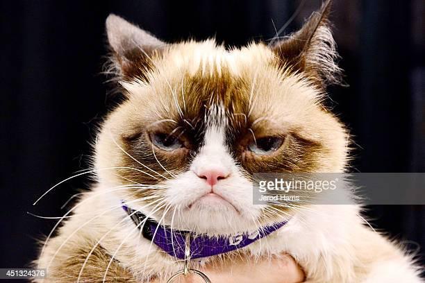 Grumpy Cat attends VidCon Day 2 at Anaheim Convention Center on June 27 2014 in Anaheim California