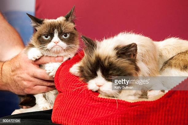 Grumpy Cat is unimpressed with her animatronic counterpart at Madame Tussauds San Francisco on December 8 2015 in San Francisco California
