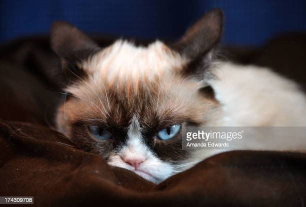 Grumpy Cat makes an appearance at Kitson Santa Monica to promote her new book 'Grumpy Cat A Grumpy Book' on July 23 2013 in Santa Monica California