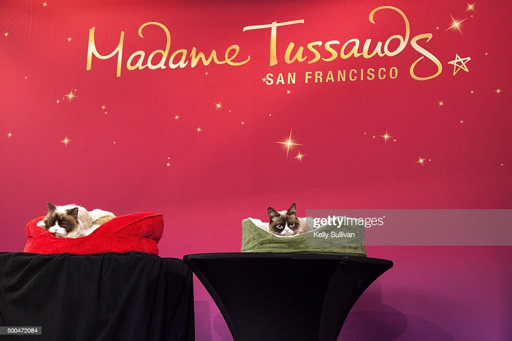 Grumpy Cat (R) makes an appearance with her animatronic counterpart (L) at Madame Tussauds San Francisco on December 8, 2015 in San Francisco, California.
