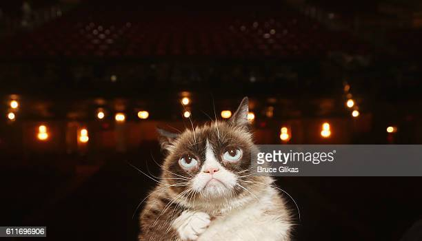 Grumpy Cat poses on the set as she makes her broadway debut in 'Cats' on Broadway at The Neil Simon Theatre on September 30 2016 in New York City