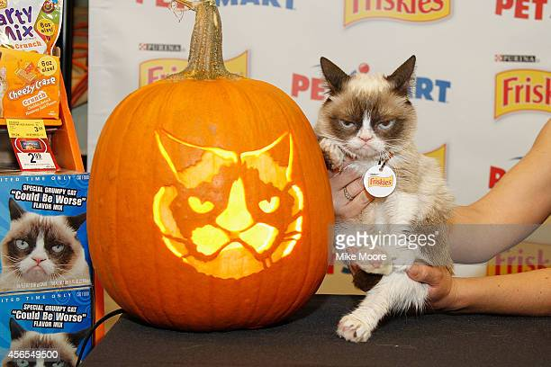 Grumpy Cat poses with the GrumpOLantern carved from a stencil created by sculptor Ray Villafane available to comsumers at www Petsmartcom during the...