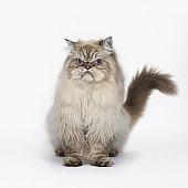 Grumpy Cat Seated