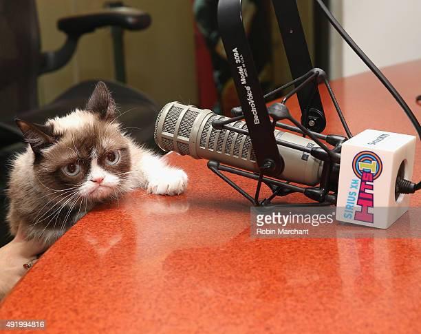 Grumpy Cat visits at SiriusXM Studios on October 9 2015 in New York City