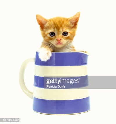 Grumpy ginger kitten in a classic milk jug : Foto de stock