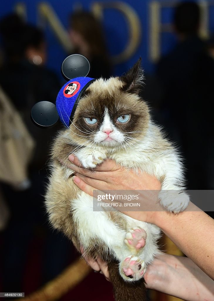 Grumpy the Cat poses on arrival for the World Premiere of Disney's 'Cinderella' in Hollywood, California on March 1, 2015. The film will be released in theaters on March 13. AFPHOTO / FREDERIC