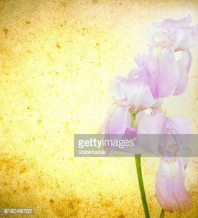 grunge de flores : Foto de stock