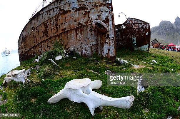 Grytviken Wreck at the former whaling base