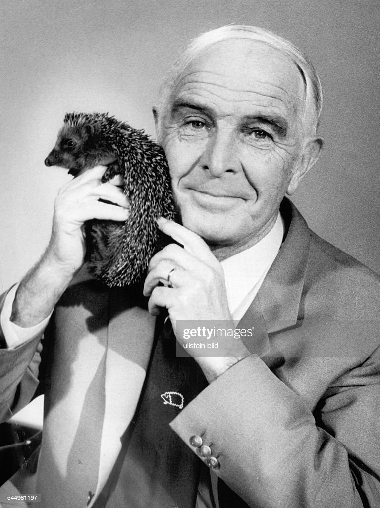 Grzimek, Bernhard - Zoologist, Ethologist, Nature documentarian, Germany - with a hedgehog during the broadcast 'Ein Platz fuer Tiere'