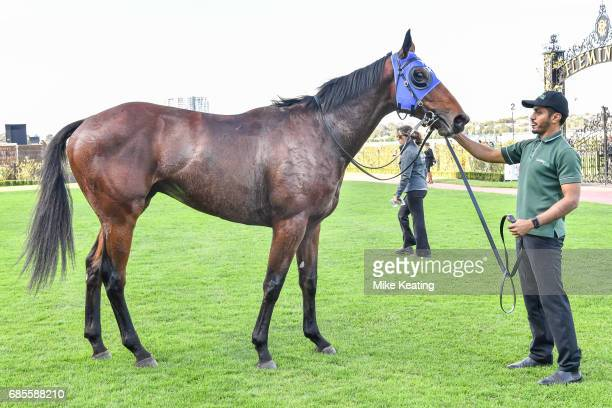 Guangzhou after winning the Winx Hall of Fame Trophy at Flemington Racecourse on May 20 2017 in Flemington Australia