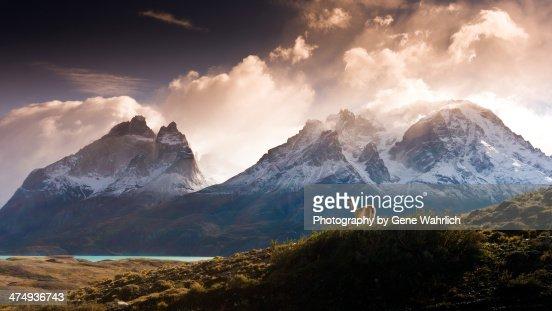 Guanoco in mountainous landscape