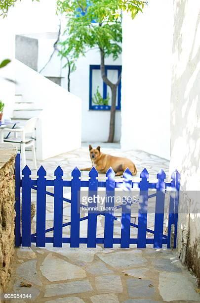 Guard Dog behind a wooden Fence - Door