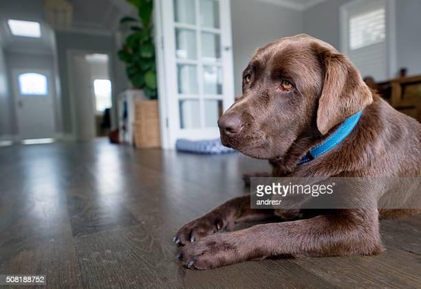 Guardian Hund