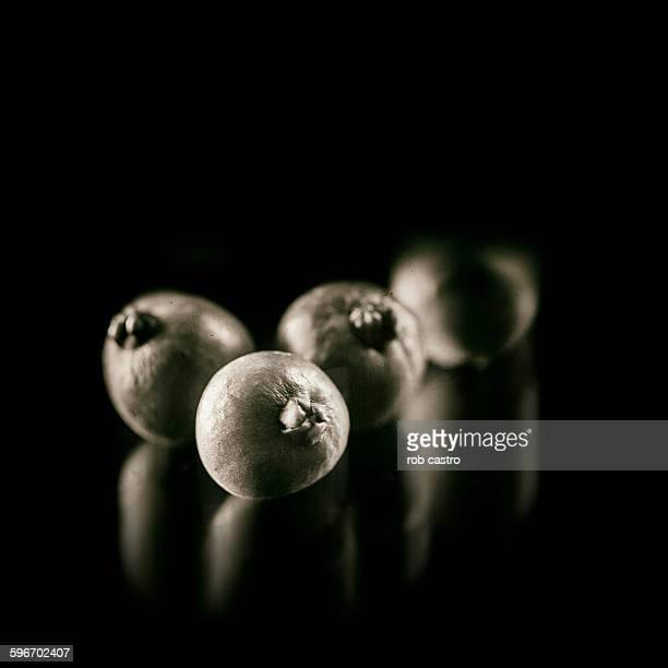 Guavas as still life