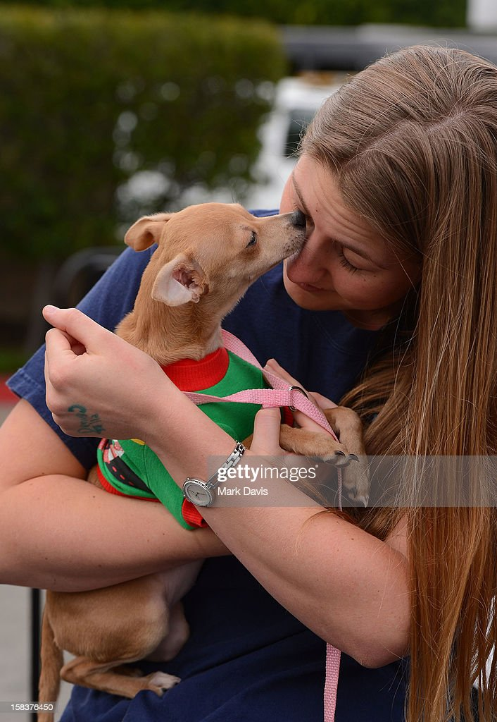 A guest interacts with a puppy at the 'Grinchmas Max To The Rescue' Holiday Dog Adoption Fair held at Universal Studios Hollywood on December 14, 2012 in Universal City, California.