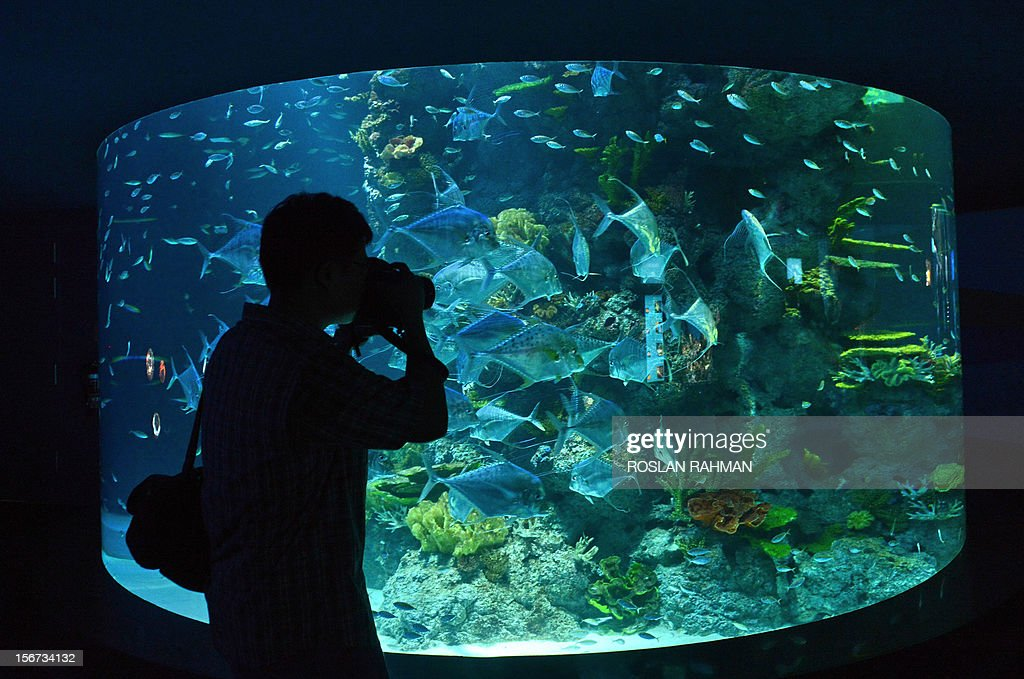 A guest takes photographs through the viewing panel at the South East Asia aquarium, the world's largest oceanarium in Sentosa Resort World marine life park during a media preview in Singapore on November 20, 2012. The aquarium will be home to 100,000 marine animals of over 800 species in 45 million litres of water that will opens to the public on November 22. AFP PHOTO/ROSLAN RAHMAN