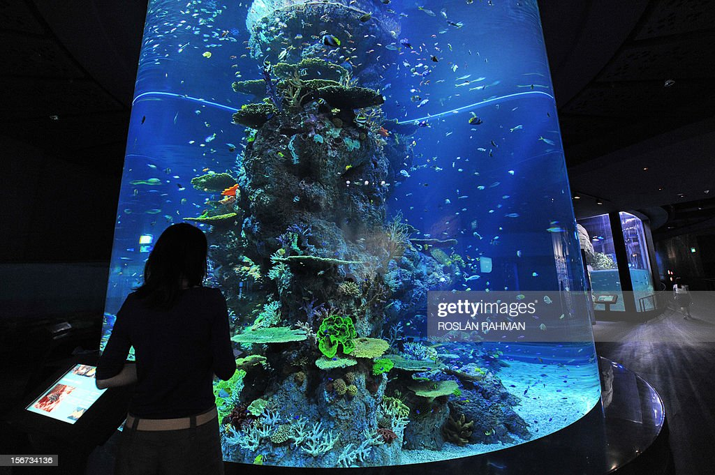 A guest watches through one of the marine animal habitat at the South East Asia aquarium, the world's largest oceanarium in Sentosa Resort World marine life park during a media preview in Singapore on November 20, 2012. The aquarium will be home to 100,000 marine animals of over 800 species in 45 million litres of water that will opens to the public on November 22.