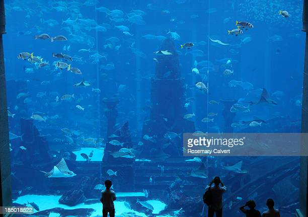 Guests view giant aquarium, Atlantis Hotel, Dubai.