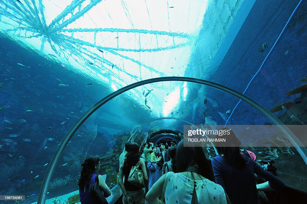 Guests walk through the South East Asia aquarium, the world's largest oceanarium at Sentosa Resort World marine life park during a media preview in Singapore on November 20, 2012. The aquarium will be home to 100,000 marine animals of over 800 species in 45 million litres of water that will opens to the public on November 22. AFP PHOTO/ROSLAN RAHMAN
