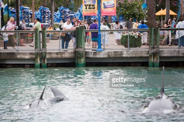 Guests watch an orca display near the exit of SeaWorld February 24 2010 in Orlando Florida A female trainer who presumably slipped and fell in to a...
