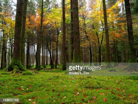 Guágan Barra Forest Park : Stock Photo