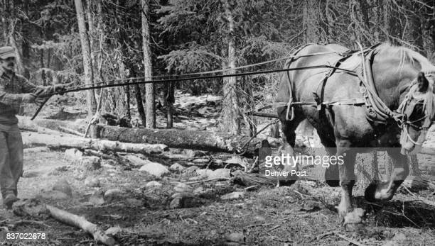 OCT 8 1975 OCT 10 1975 ***** Guides Ben A 1800Pound Belgian Horse as he skids logs down a ski run at lake Eldora Ski area near Nederland Credit...