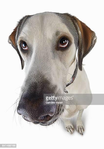 Guilty Looking Cartoon Dog