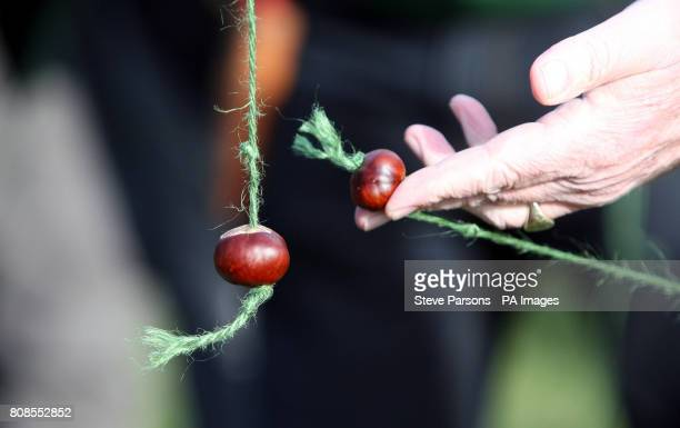 A Guinness World Record attempt for the most simultaneous conker matches at one time at the RHS Garden Wisley near Woking Surrey