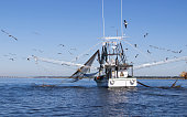 Gulf Coast Shrimping boat off Biloxi/Ocean Spring's Coast.  Small dolphin partially visible off left net.