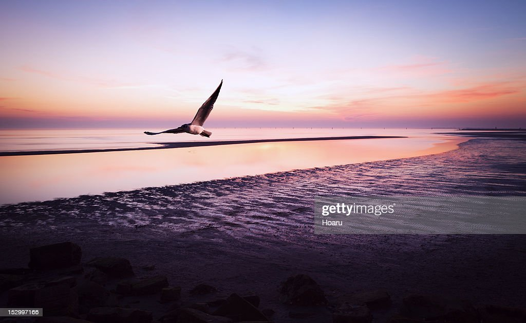 Gull at the Sunset