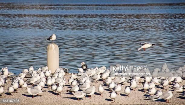 Gull on ground
