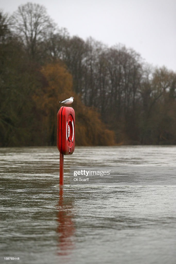 A gull perches on an emergency flotation aid partially submerged by flood waters from the River Thames on December 29, 2012 in Pangbourne, England. The Environment Agency has issued widespread flood warnings across the UK whilst the Met Office has predicted further rain forecast for the remainder of 2012, which is likely to be recorded as the wettest year since records began in 1910.
