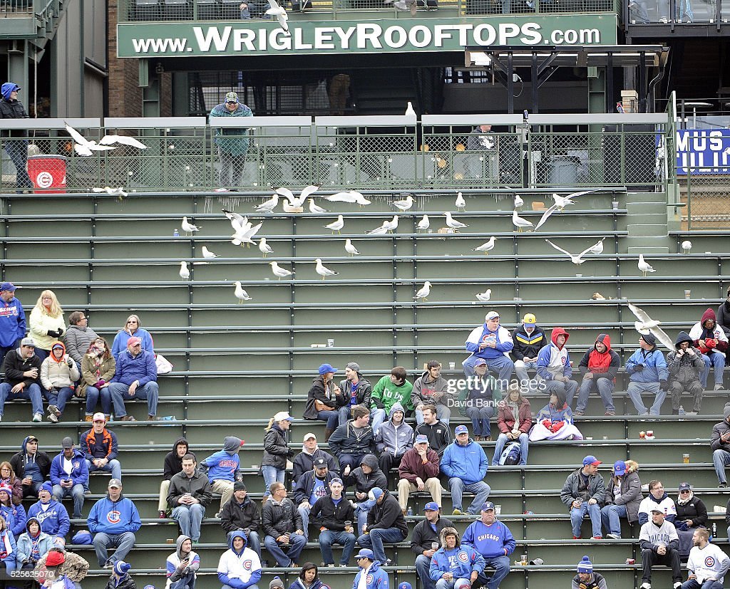 Gulls perch in the bleachers during the seventh inning of a game between the Chicago Cubs and the Milwaukee Brewers on April 28, 2016 at Wrigley Field in Chicago, Illinois.