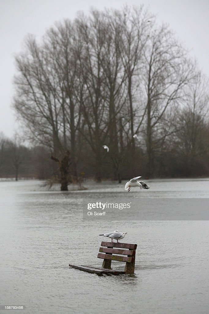 Gulls perch on a partially submerged park bench due to flood waters from the River Thames on December 29, 2012 in Pangbourne, England. The Environment Agency has issued widespread flood warnings across the UK whilst the Met Office has predicted further rain forecast for the remainder of 2012, which is likely to be recorded as the wettest year since records began in 1910.