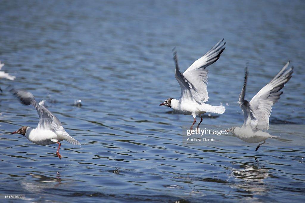 Gulls : Stock Photo