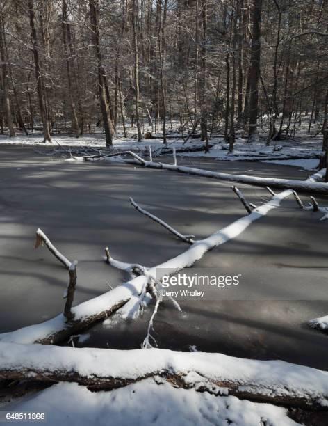 Gum Swamp, Snow, Winter, Smokies