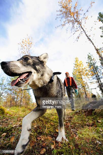 Gun dog walking in forest with hunter