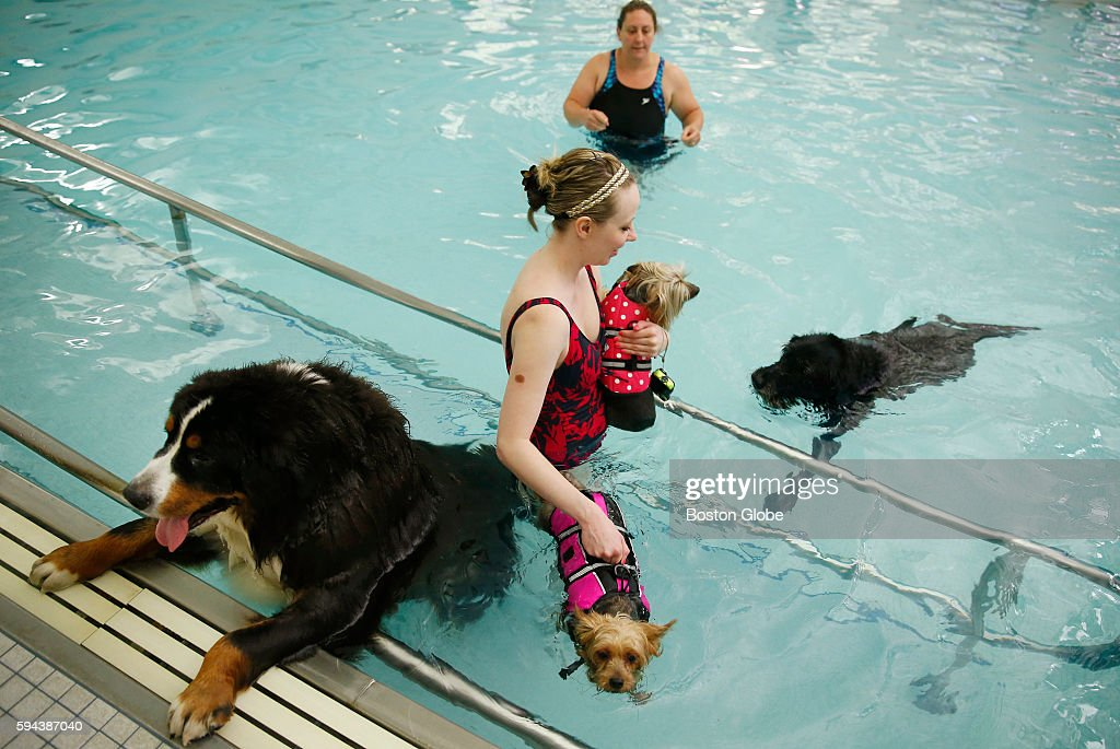 Gunther seeks a quick exit out of the pool as Amanda Vendt of Salem sneaks past with her two dogs Sasha and Momo during the annual Puppy Swim at the...