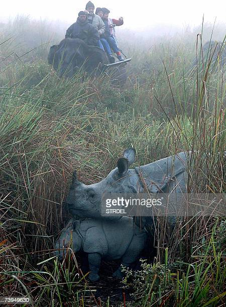 In this picture taken 27 January 2007 A group of tourists seated on an elephant watch a rhino along with her baby in Kaziranga National Park some 220...