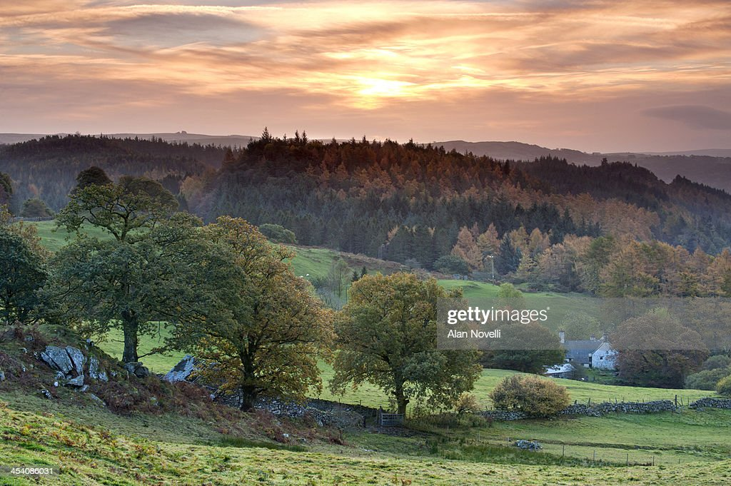 Gwydyr Forest, Snowdonia, Wales : Stock Photo