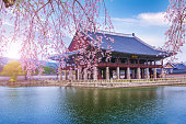 """tourist""""n and gyeongbokgung palace in spring, South Korea."""
